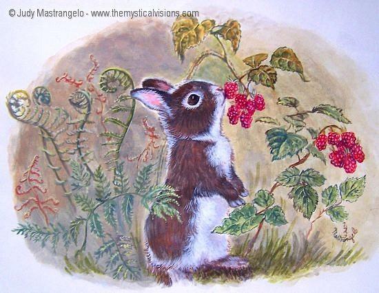 Bunny Eating Raspberries